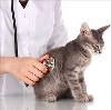 Ветеринарные клиники в Ельце